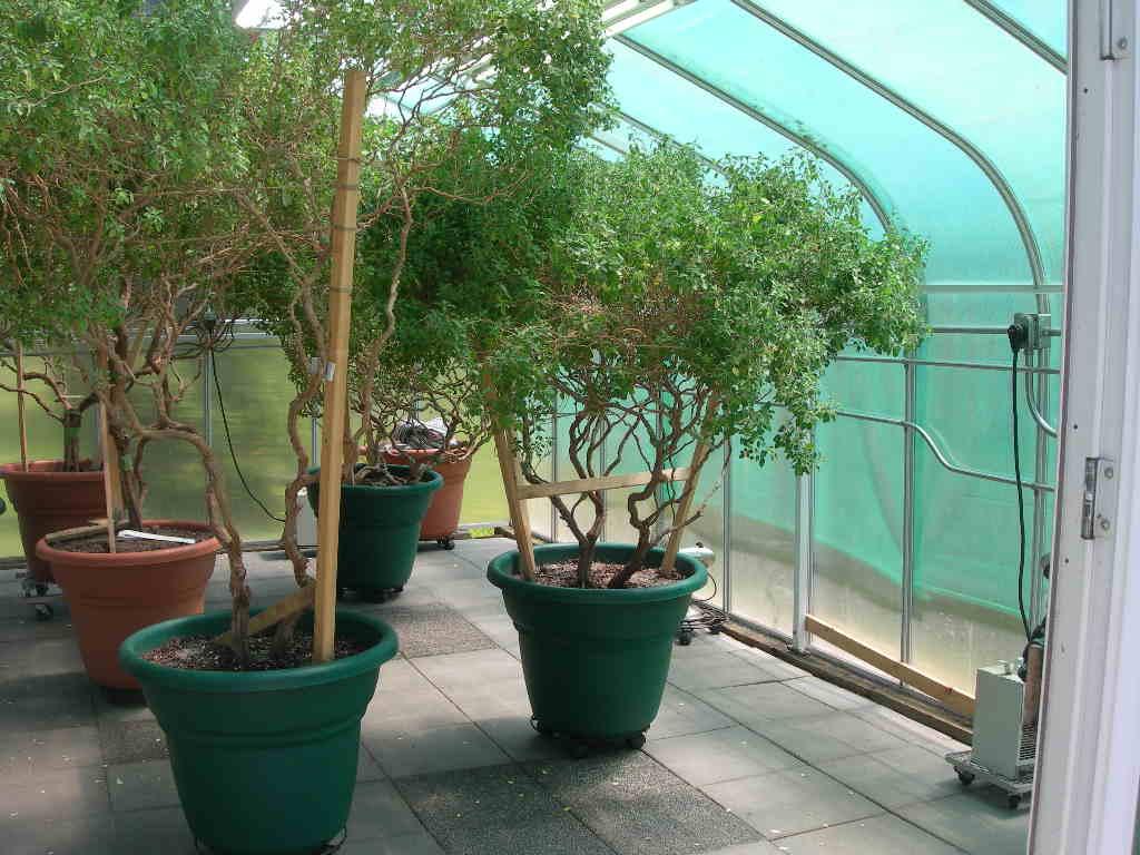 Бизнес идеи выращивание огурцов 76