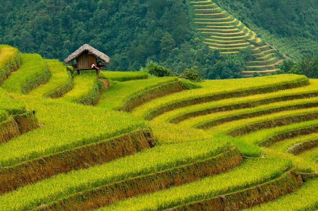 Paddy Fields, PHILIPPINES