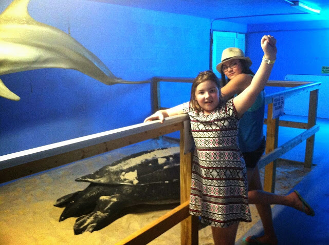 Clearwater Beach Marine Aquarium Museum.