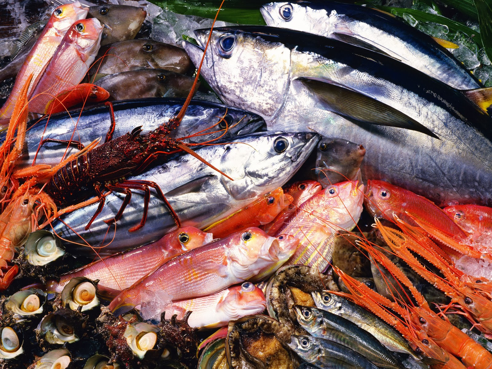Makanan laut baik untuk kesehatan kulit