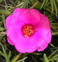 MARZO, la edad de las flores