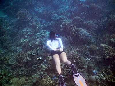 Melihat terumbu karang dengan snorkeling