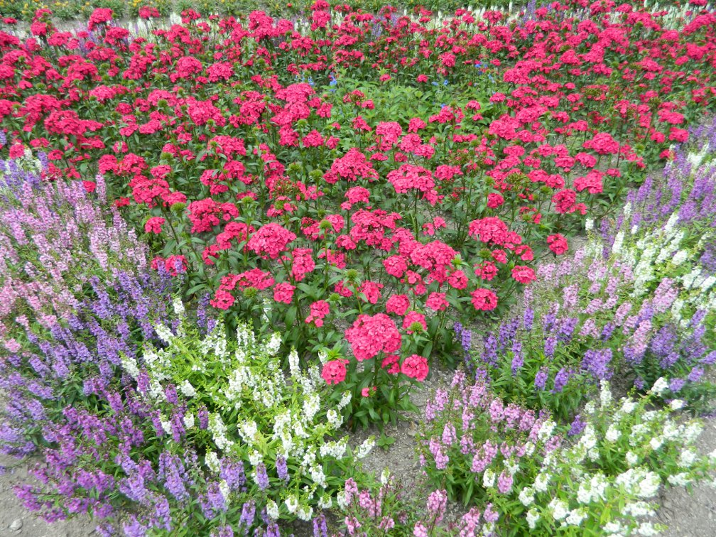 James Gardens late summer annuals by garden muses- a Toronto gardening blog