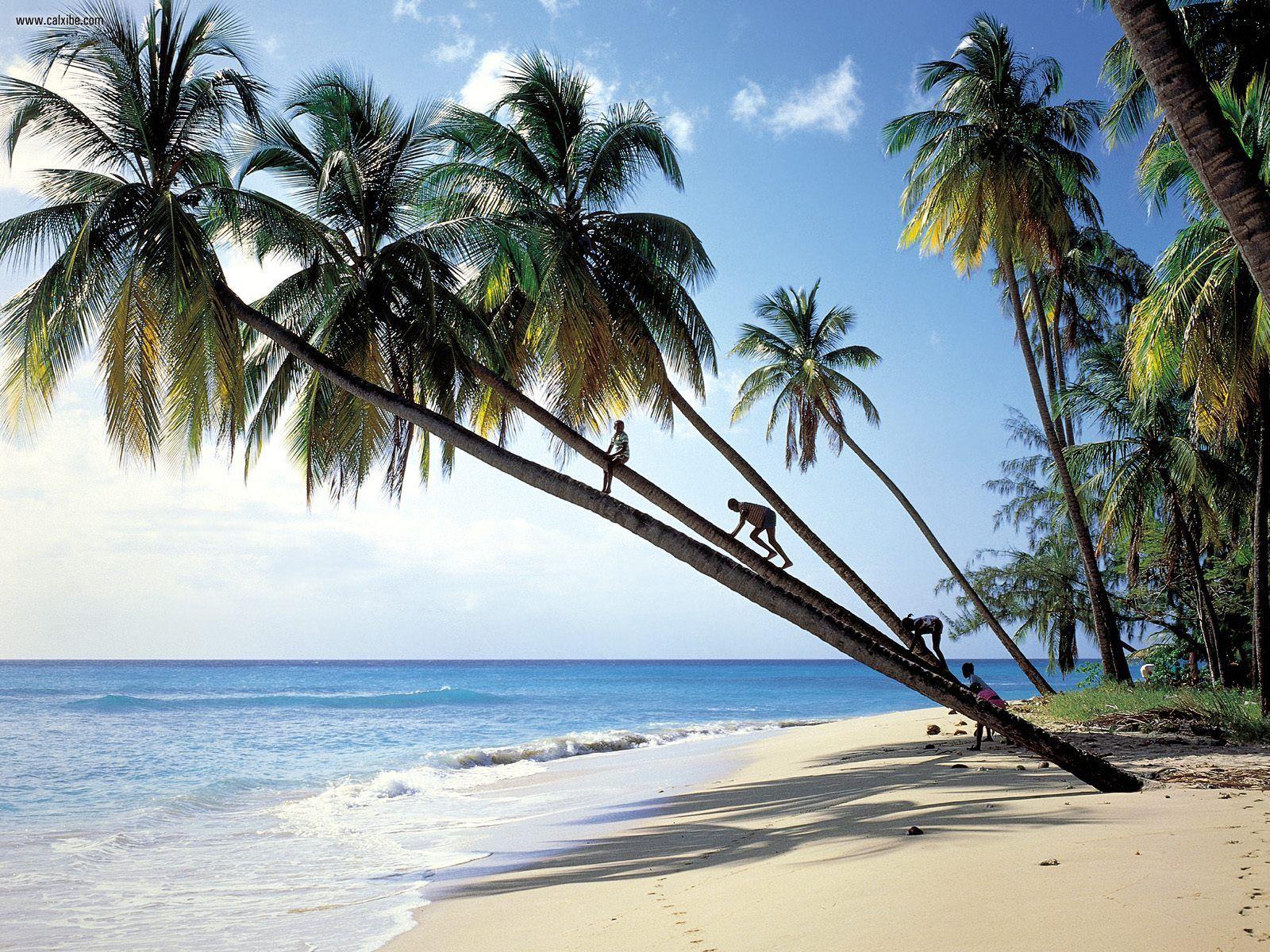 http://3.bp.blogspot.com/-LrDTL82Z-SY/T5gP5iCDWrI/AAAAAAAAADE/zL-fFFK79zs/s1600/Gibbs_Beach_Mullins_Bay_Barbados.jpg