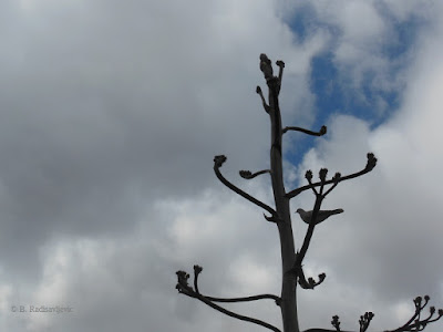 Bird Perched on Agave at Mission San Miguel, © B. Radisavljevic