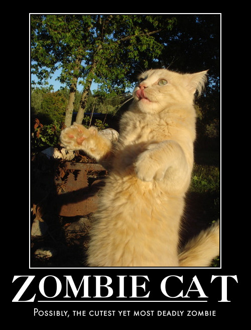 Good Morning Zombie Meme : Good morning monday