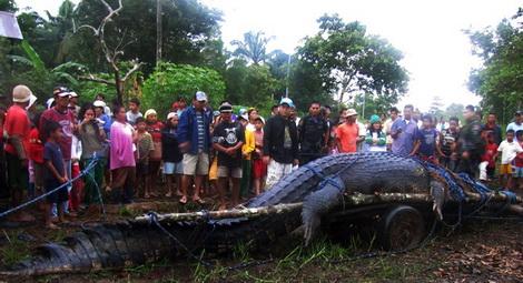 самый большой в мире крокодил фото