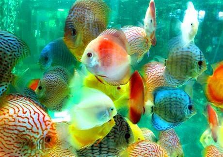 NHững bể cá cảnh đẹp nhất