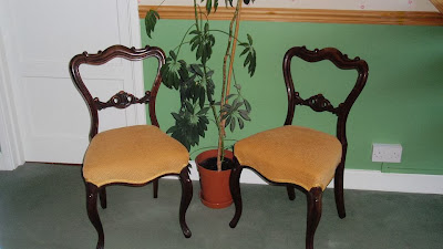 A photograph of a pair of restored balloon back chairs