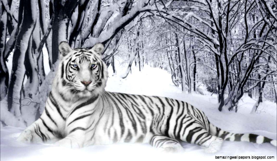 White siberian tiger in snow - photo#5