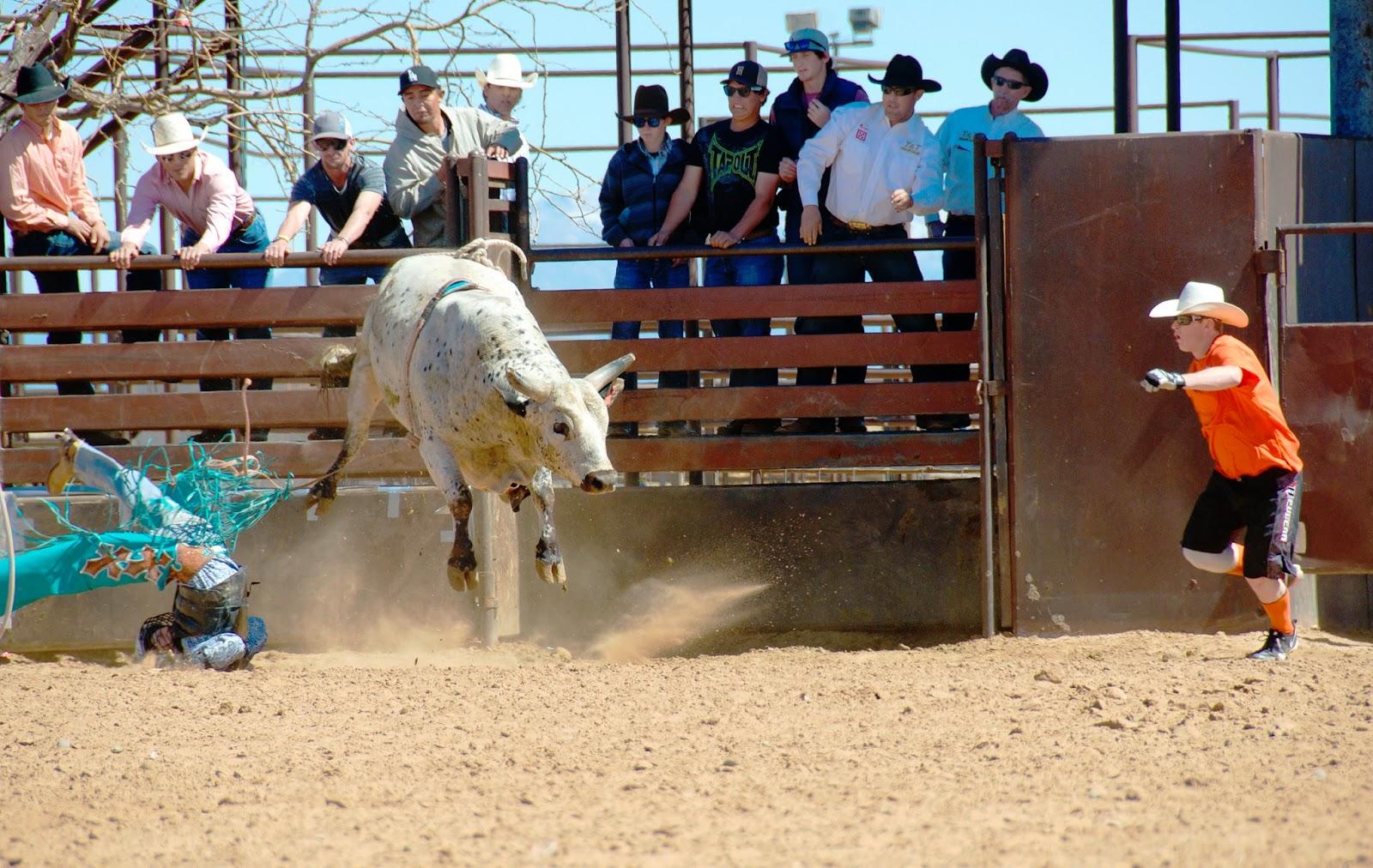 Heidi Utz Photography, rodeo photos