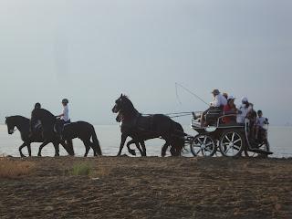 Delta de L'Ebre carriage horses - Sant Carles de La Rápita photo