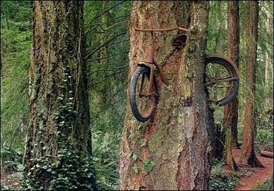 Basikal Dalam Pokok