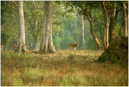 Deer in KANHA NATIONAL PARK