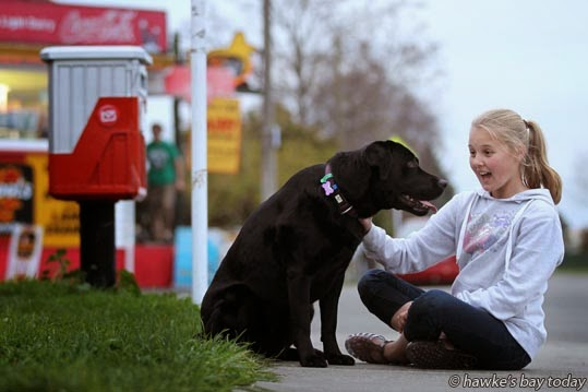 Jessie the labrador, family pet, with Breanna McRae, 12, Hastings, pictured on Grove Rd, Hastings, for a story about a stray dog incident. photograph