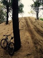 caminos de cuatriciclos en los bosques de la reserva de cariló