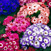 Colourful Flower Bunch Wallpaper
