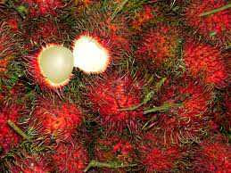 Klasifikasi dan Morfologi Tanaman Rambutan ( Nephelium lappaceum L)