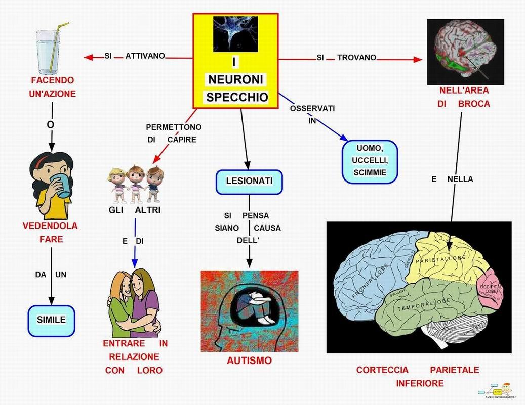 Nuova didattica neuroni specchio linguaggio e coscienza - Neuroni specchio empatia ...
