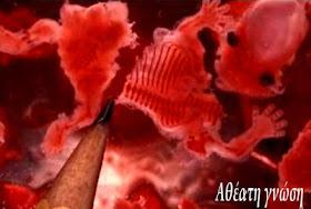 ΠΡΟΣΟΧΗ! ΠΟΛΛΑ ΕΜΒΟΛΙΑ ΠΑΙΔΙΚΗΣ ΗΛΙΚΙΑΣ ΠΕΡΙΕΧΟΥΝ ΑΝΘΡΩΠΙΝΗ ΕΜΒΡΥΙΚΗ ΠΡΩΤΕΙΝΗ
