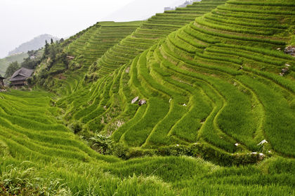 Indonesia for Define terrace farming