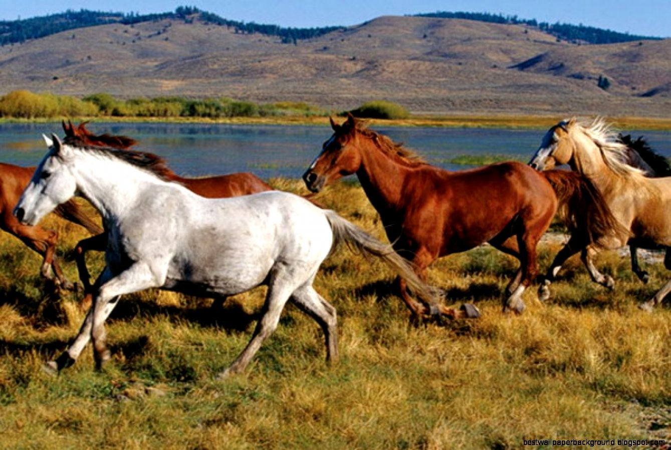 Image gallery for  wallpaper murals horses