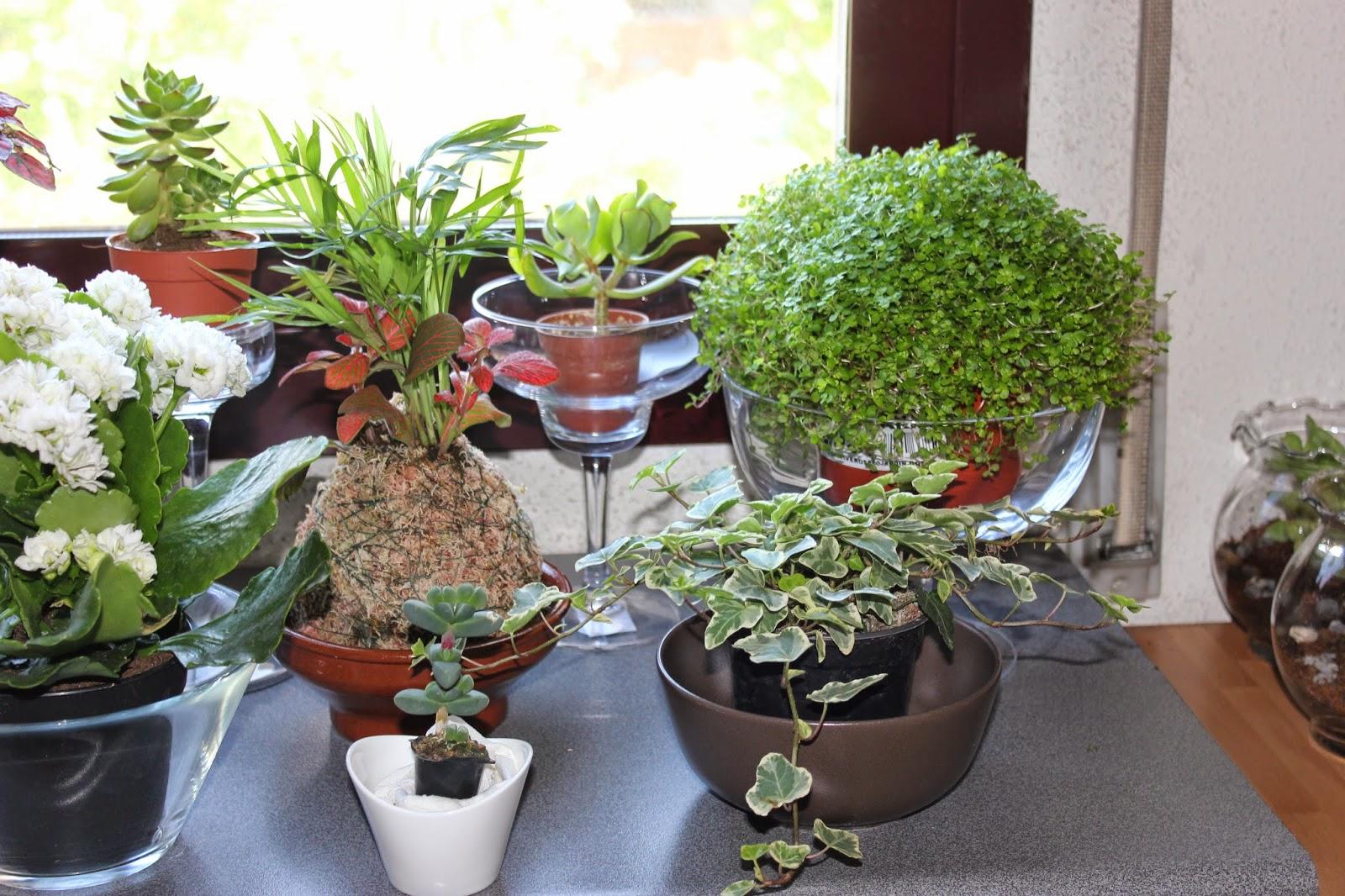 mis plantas y animales donde se pueden poner kokedamas On que plantas se pueden poner en macetas
