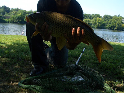 Extreme Philly Fishing Of Extreme Philly Fishing Surrounded By Carp And Catfish At