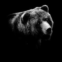 Портреты животных