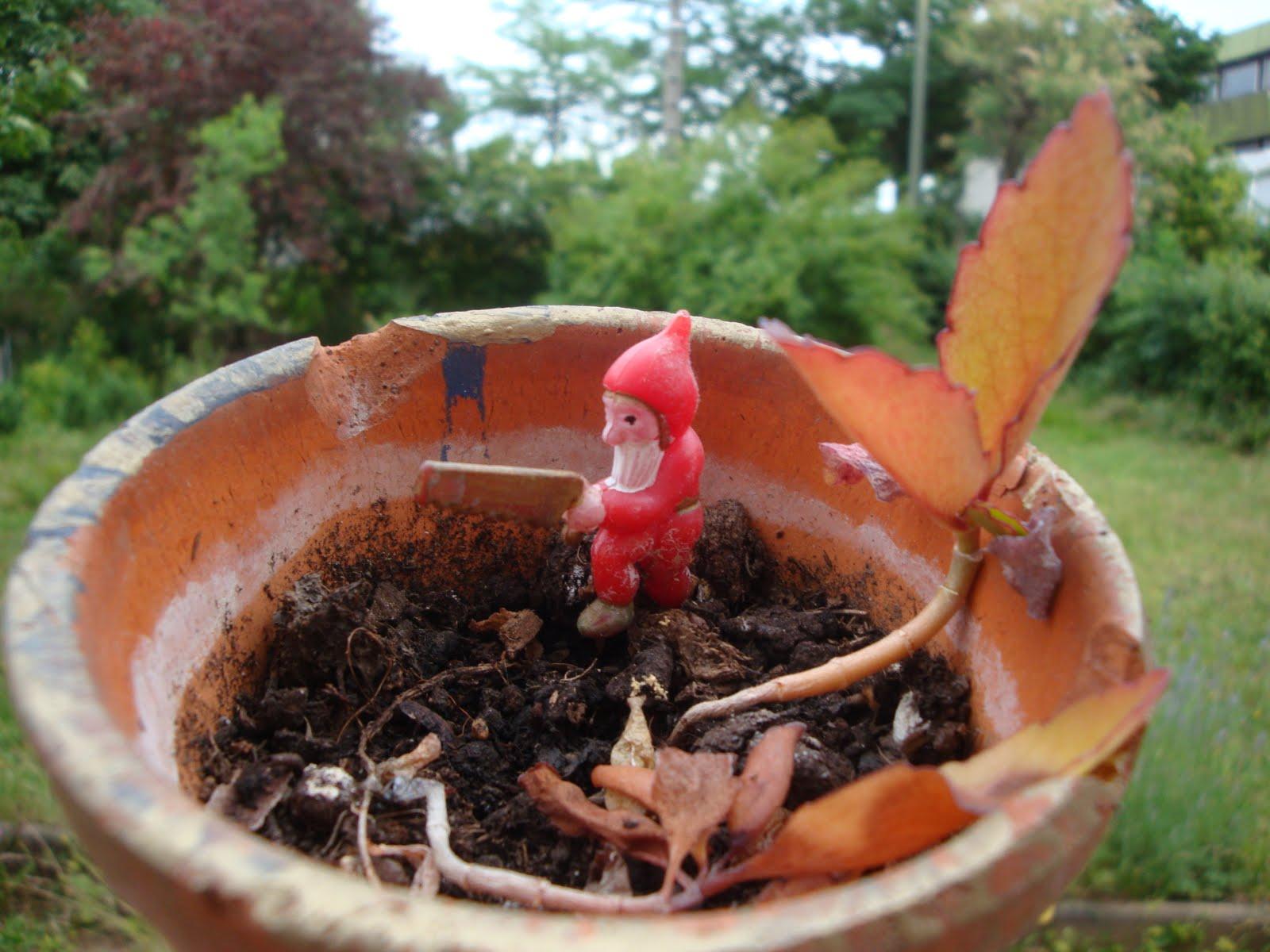 Oui mes moi journal de mes minorit s mes nains de jardin for Jardin 5 juillet biskra