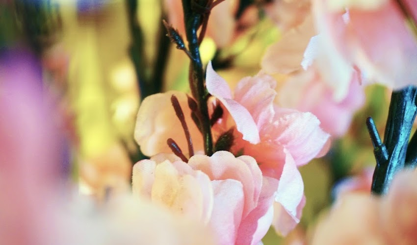 <Food> Sakura blossoms with Honeybon's Sakura Mango Cake!