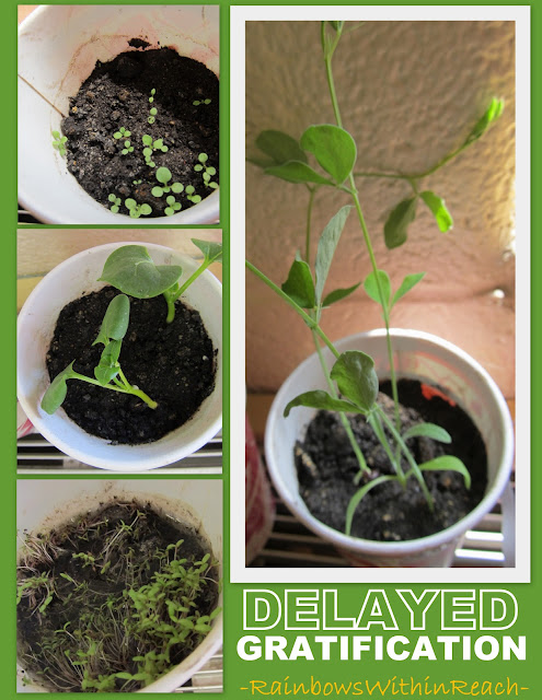 photo of: Seeds and plants in preschool, spring time science for children, preschool science