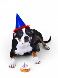 Dog Cake Frosting Recipes