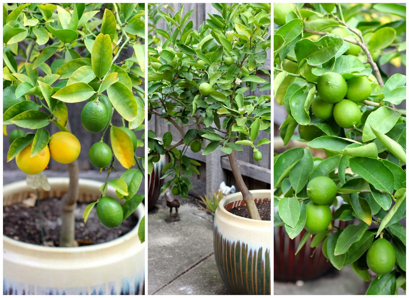 lemons vs limes What is healthier: lemon water or lime water read on for the health benefits of  drinking lemon water or lime water, and which is the better.