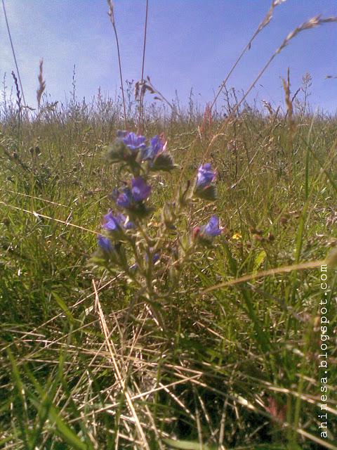 отдых в Беларуси, цветы полевые