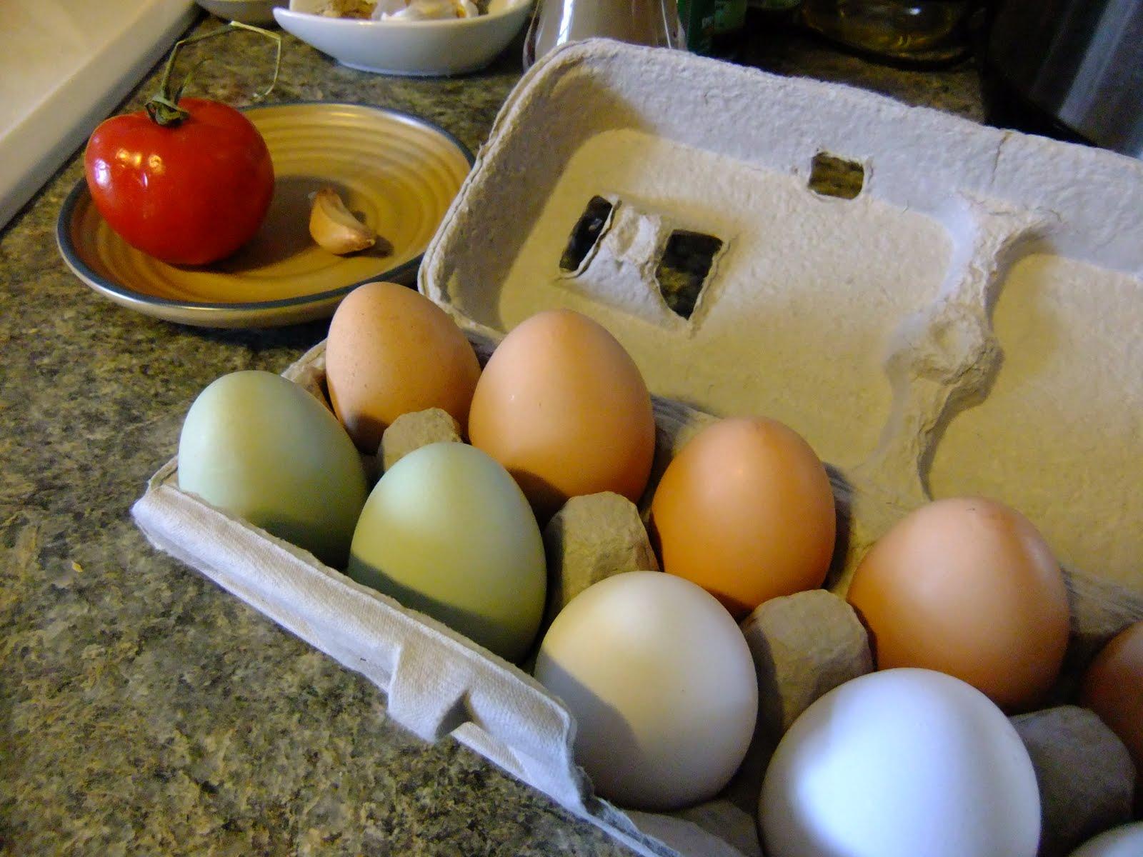 Josh Day's chicken eggs