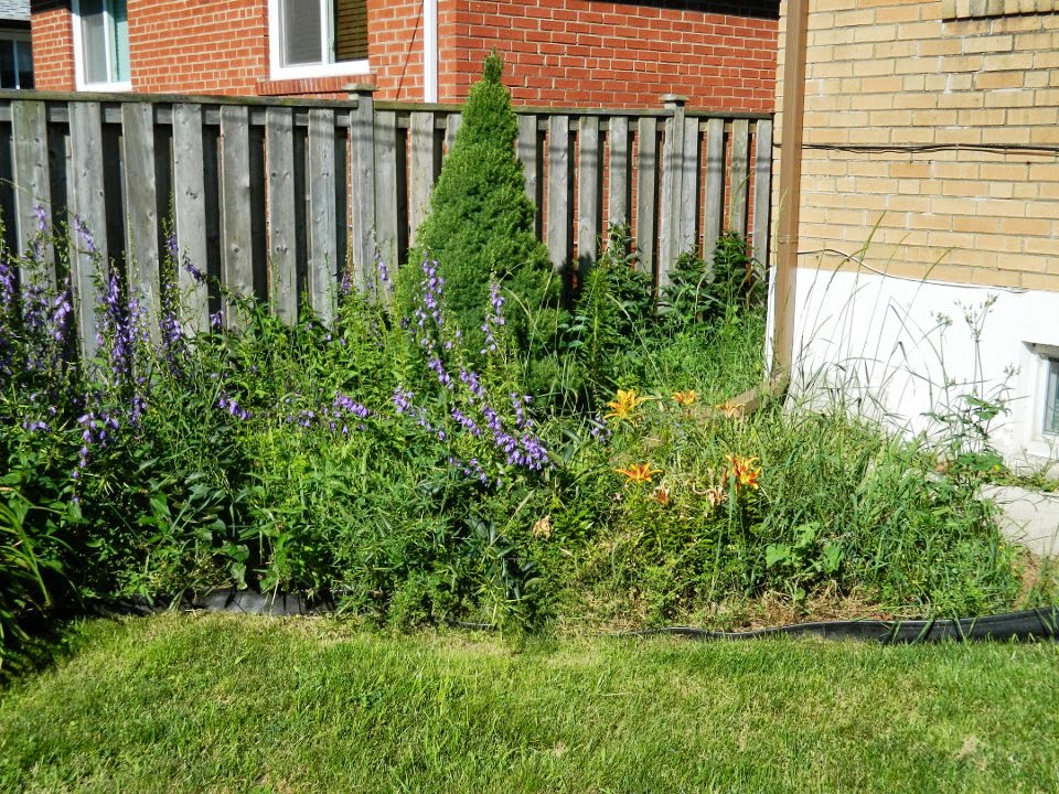 Scarborough Toronto back yard garden clean up before by Paul Jung Gardening Services