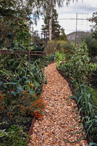 Grönsakslandet i oktober 2019