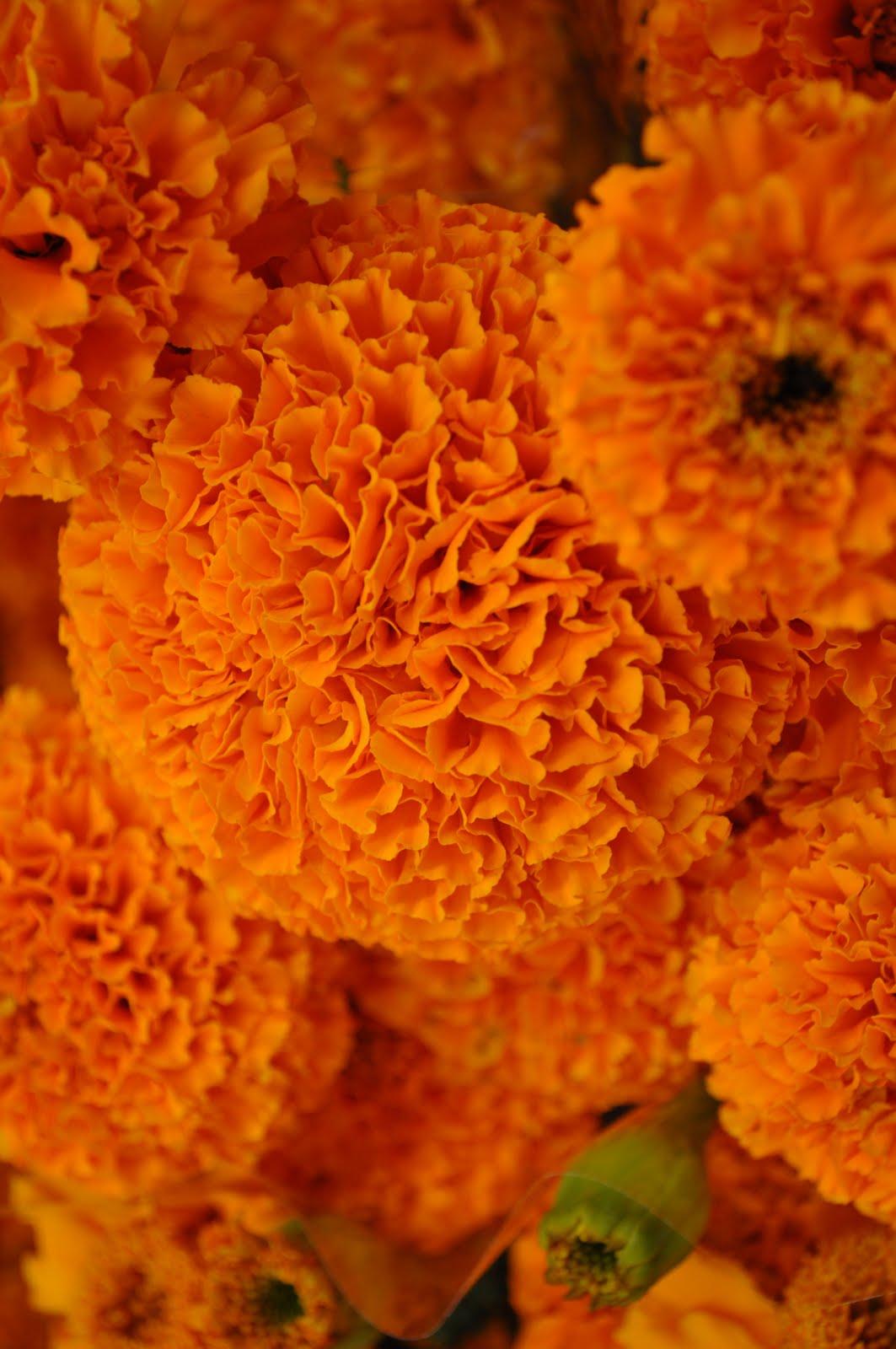 Terrarium & Timmy flower mart