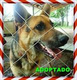 CASH ADOPTADO!!!!