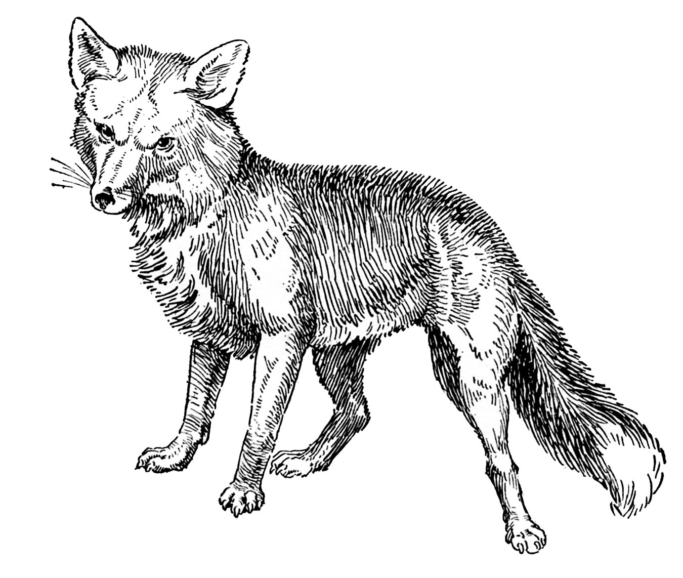 http://3.bp.blogspot.com/-LwnQikLmB-E/Tzaia-ABtqI/AAAAAAAAQi4/Nq9ufh5n2NU/s1600/fox+vintage+image+GraphicsFairy002.jpg
