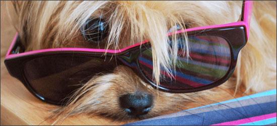 Prendre Son Chien En Photo Petites Astuces Woof Mag 39 Le Blog Des Chiens Heureux