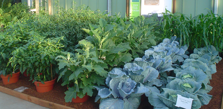 Container Vegetable Garden Plans The Gardening