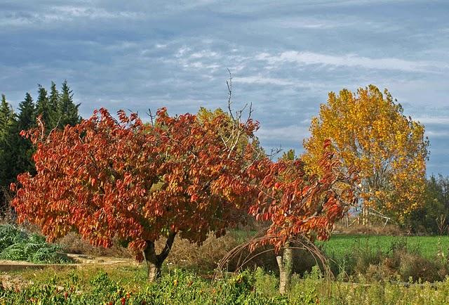 Resultado de imagen para abonar otoño