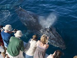 ikan paus bermain
