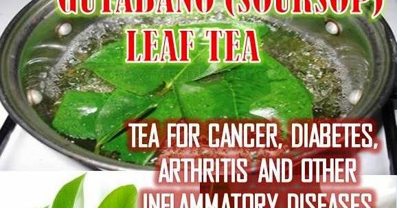HEALTHY FOODS & HERBAL MEDICINES: GUYABANO (SOURSOP) TEA ... Dried Guyabano Leaves