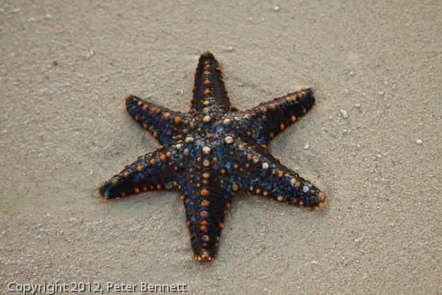 http://pwezapweza.blogspot.cz/2012/03/star-points-close-ups-of-starfish-at.html
