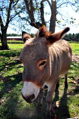 Donkey-Hickory-Ridge-Studio