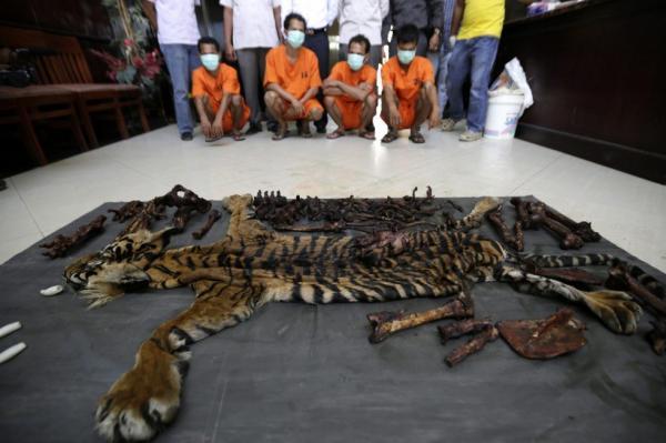 Pembunuhan Harimau