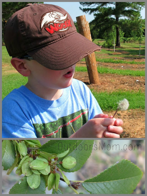 Nature Walk: Seed and Nut Hunt + Craft